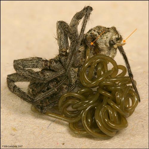 As ervas que matam parasitas da pessoa