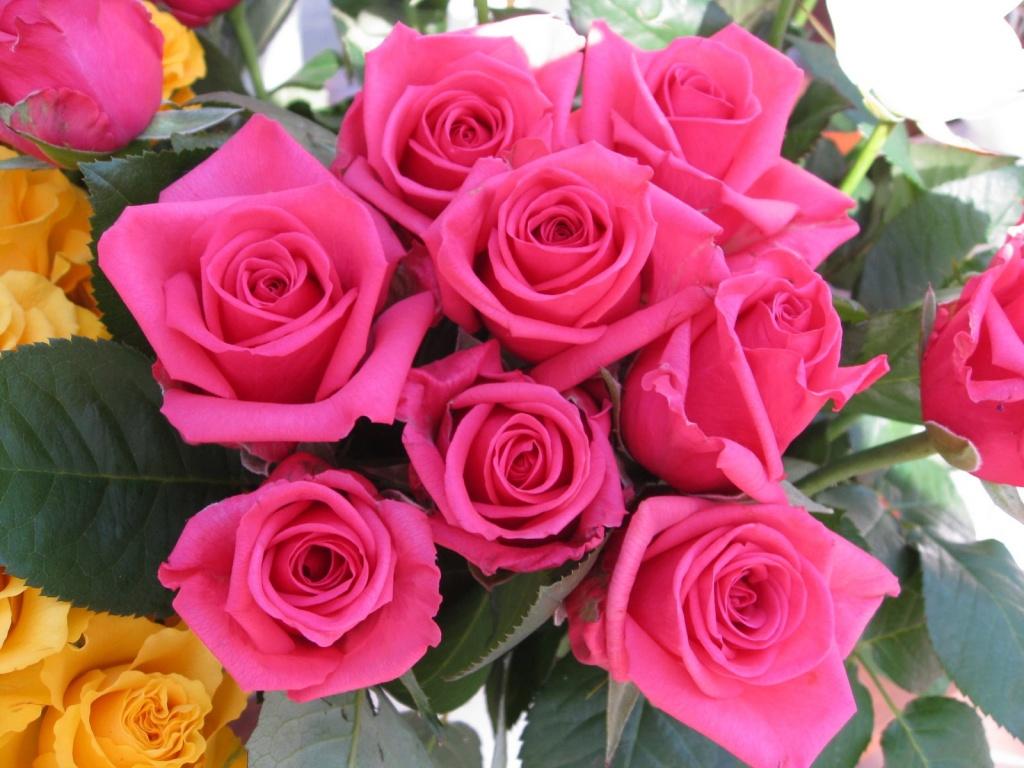 Ok g zel i ek resimleri tam ekran - Fotos de flores bonitas ...
