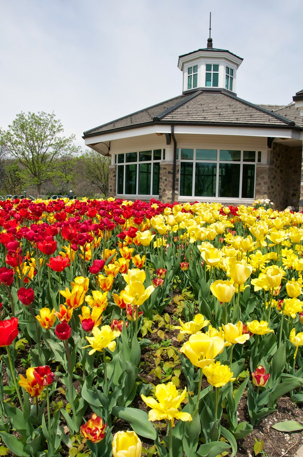Milwaukee Area Parks Where To See Spring Flowers