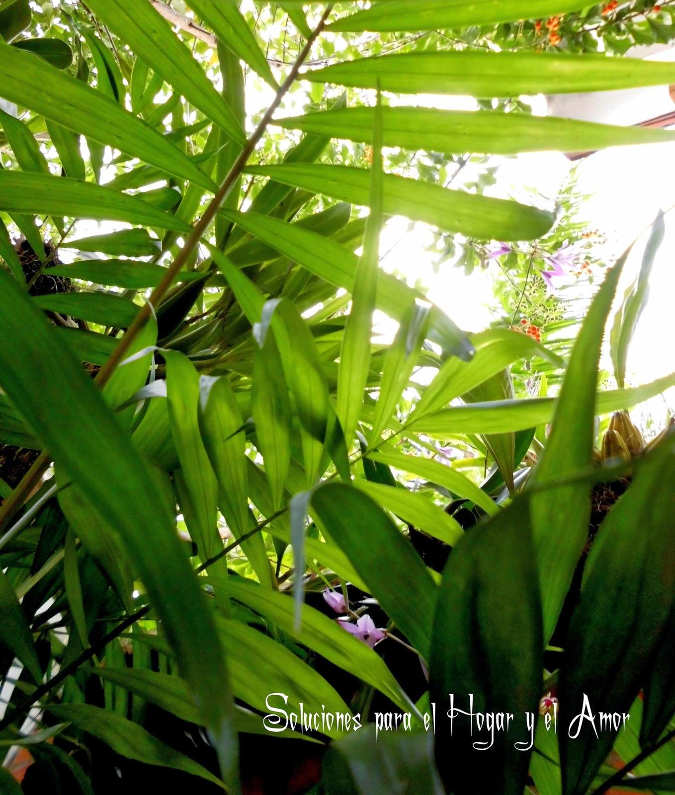 Poema de Primavera, plantas, flores, luz del sol