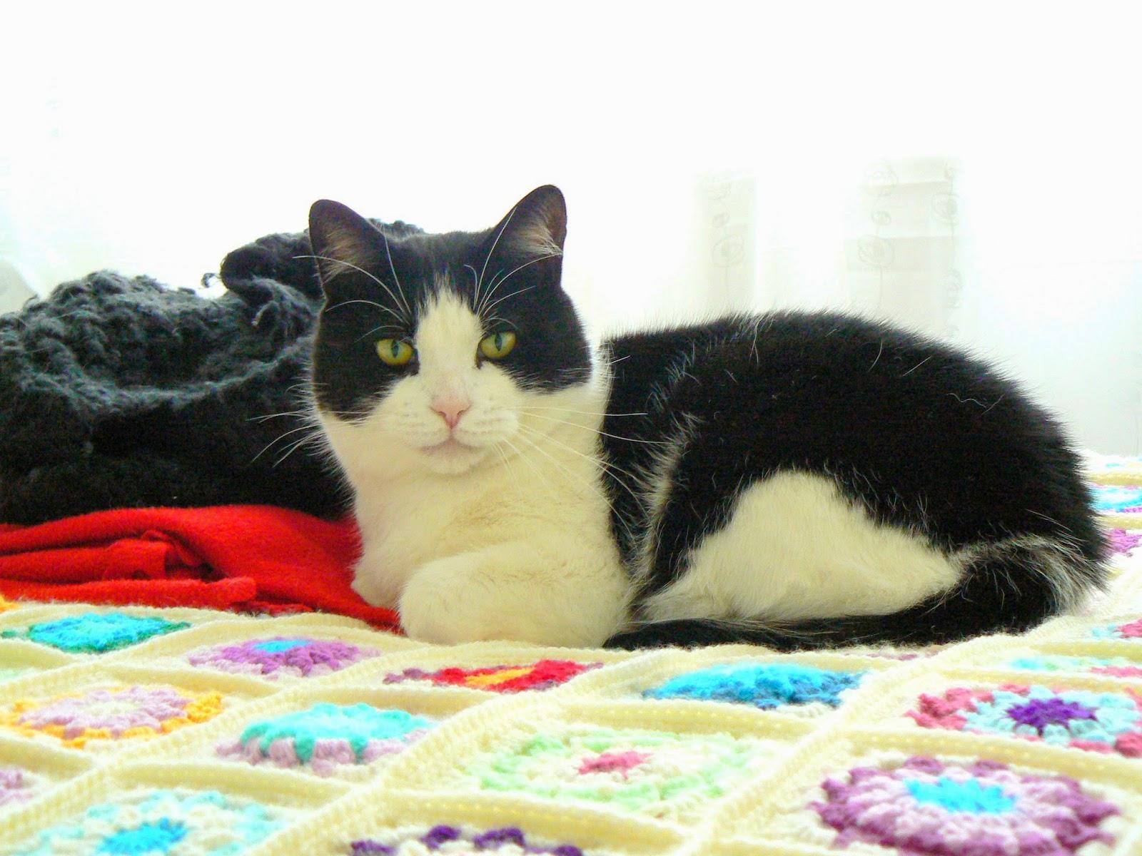Little Crochet: ?bercute Amigurumi Kitty Cat
