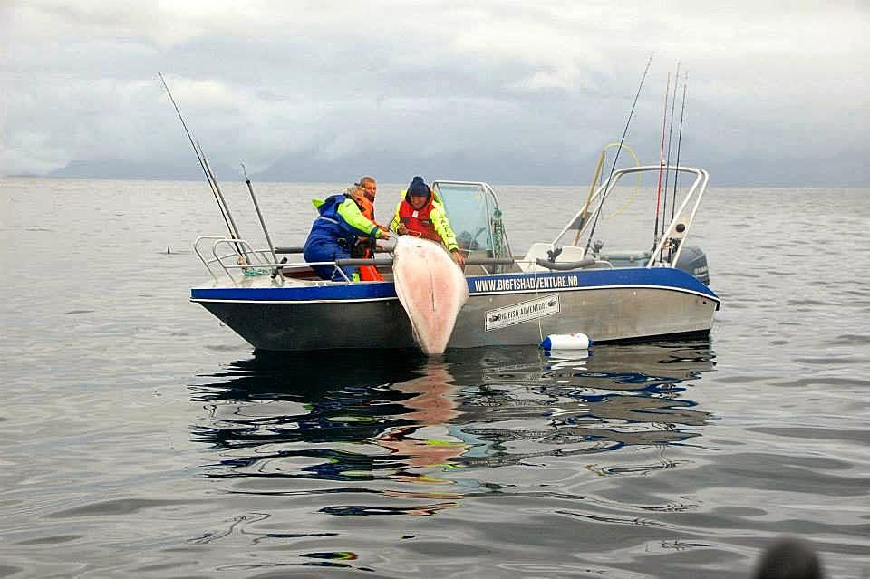рыболовные катера норвегии