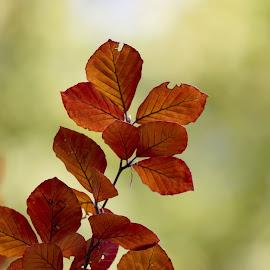foto daun ukuran besar