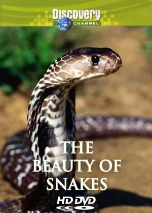 Vẻ Đẹp Của Loài Rắn - Beauty of Snake