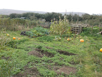 Allotment Growing - Crop Rotation