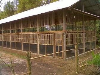 panduan membuat kandang ayam kampung