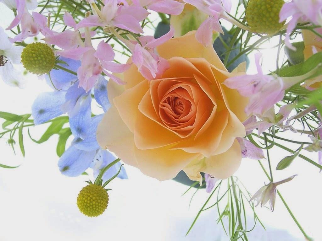 Beautiful Rose Flowers Hd Wallpapers For Desktop