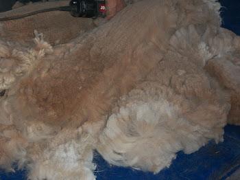 Stewie's fabulous blanket