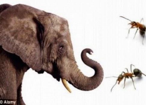 Jawaban Ilmiah Kenapa Gajah Takut Semut