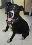 10/2/11 See Video of Jose Shelter Dog Abandoned by Family -Too Young to Die -Please Adopt or Rescue