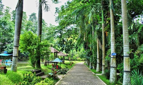 Kampung Wisata Taman Lele Semarang, Rental Motor, Rental Motor Semarang, Sewa Motor, Sewa Motor Semarang, Rental Motor Murah Semarang, Sewa Motor Murah Semarang,