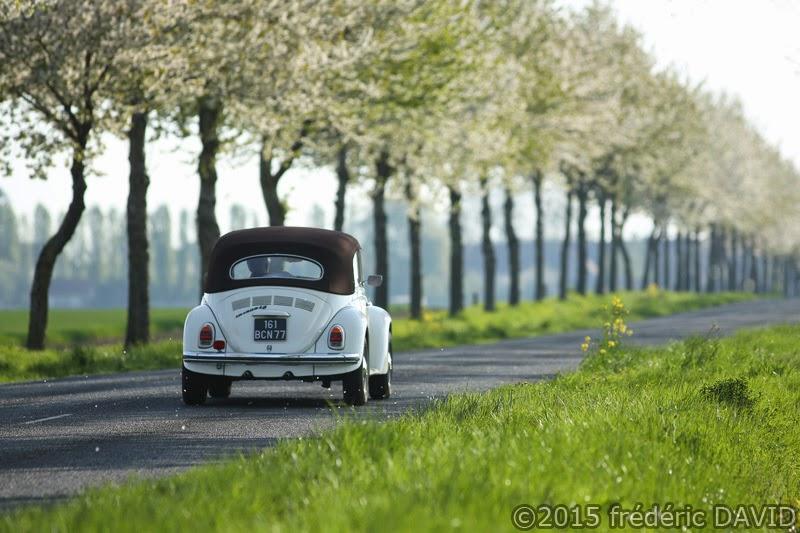 printemps fleurs route coccinelle volkswagen