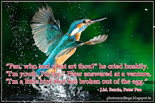 birds wallpaper with quotes