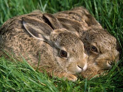 Linda pareja de conejos sobre el pasto verde