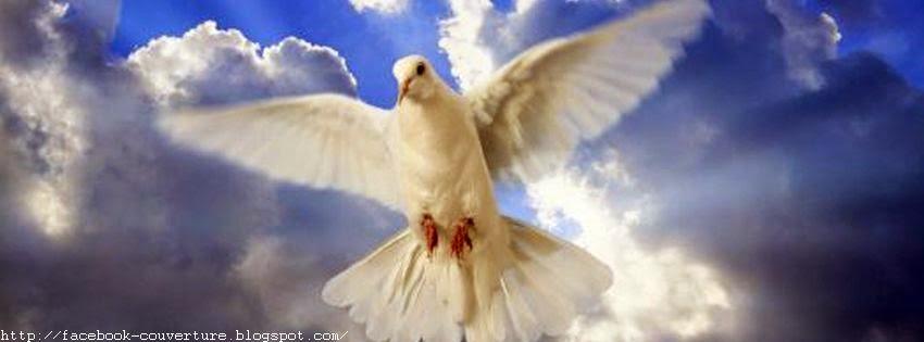Couverture facebook les colombes oiseaux