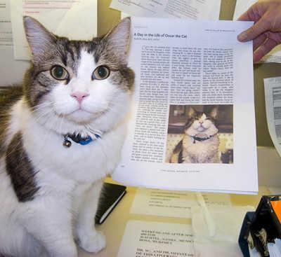 Oscar Kucing Yang Dapat Mendeteksi Kematian Famous