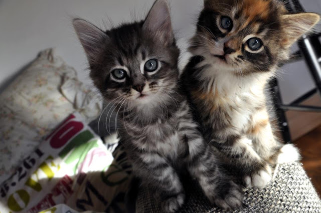 funny cat pictures, two cute kittens