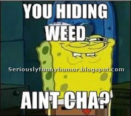 SpongeBob - You hiding Weed, ain't cha!