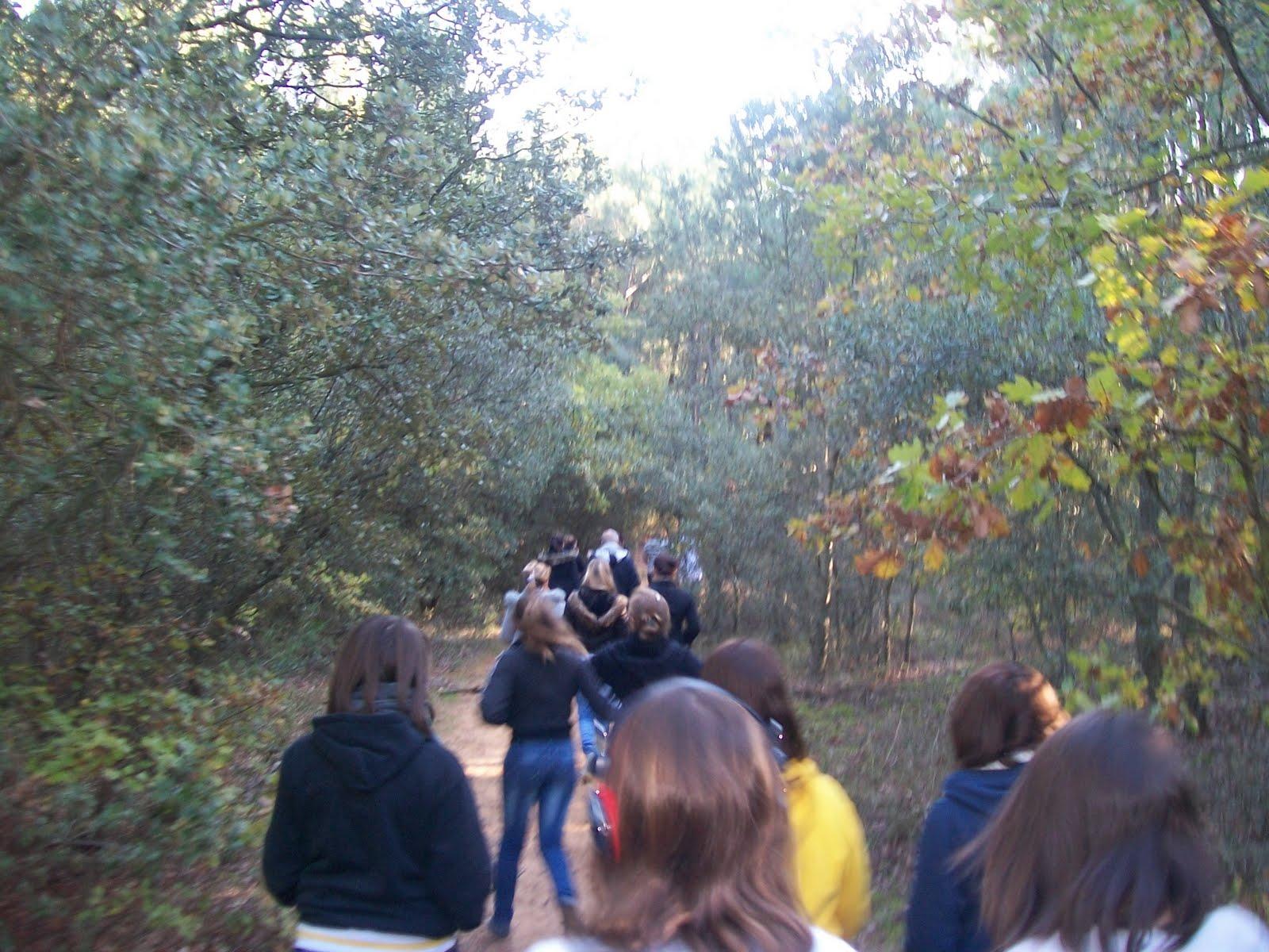 Ecole cheval paysage promenons nous dans les bois for Betes dans le bois