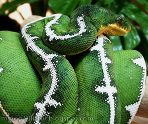 Top 10 Most Beautiful Snakes in the World