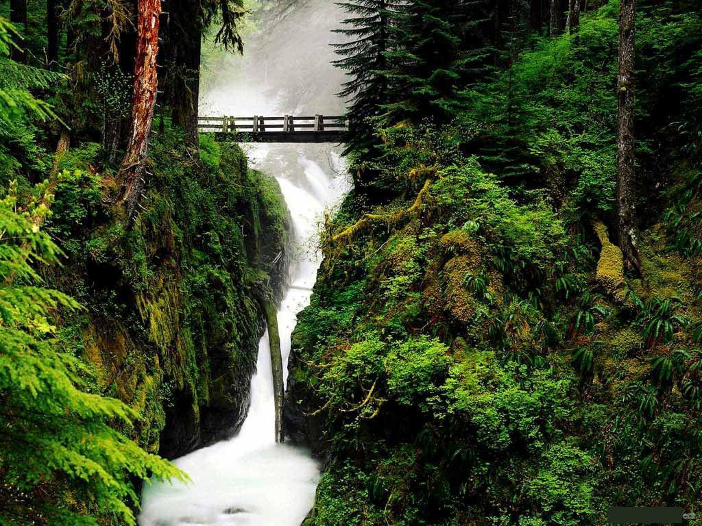 http://4.bp.blogspot.com/-2oTYMOMq7dk/Tf1muRXgy7I/AAAAAAAAKdo/Bf1tpKsuuyc/s1600/free-wallpaper-nature-045.jpg