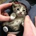 Feline Friday #14: 15 March 2013