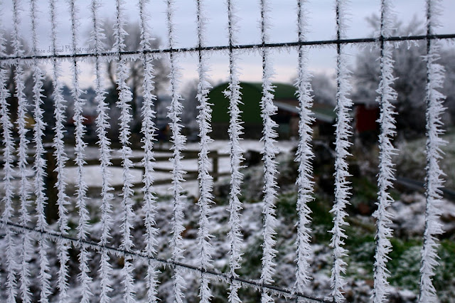 frosted fence, Oughterard