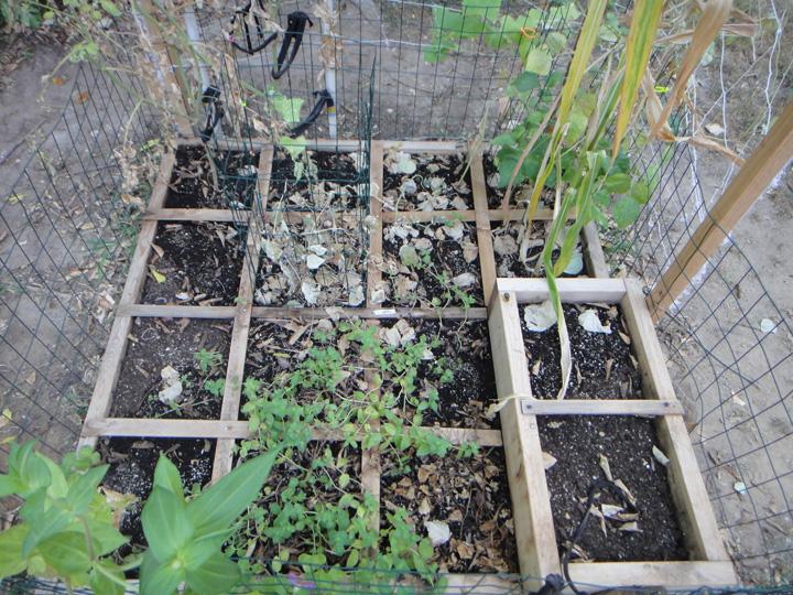 Raising addie square foot garden fifteen weeks for Gardening 7 days to die
