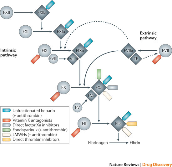Factor xa inhibitor drugs pharmacology