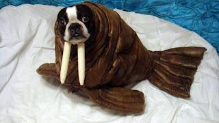 lol fish dog