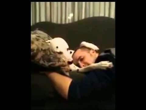 """Momento """"Own"""" do dia #6 - Carinho canino"""