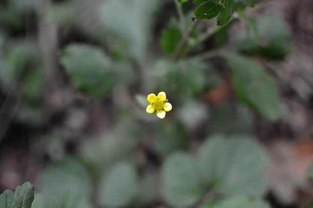 Autumn Woodland Walk Yellow Flower