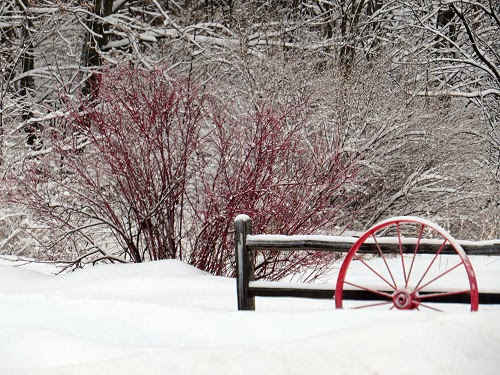 red wheel and white snow