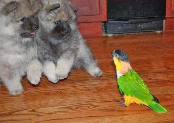 Funny animals of the week - 20 December 2013 (40 pics), puppies vs bird