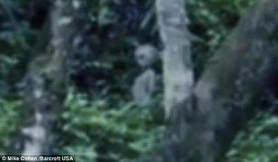 extraterrestre brasil