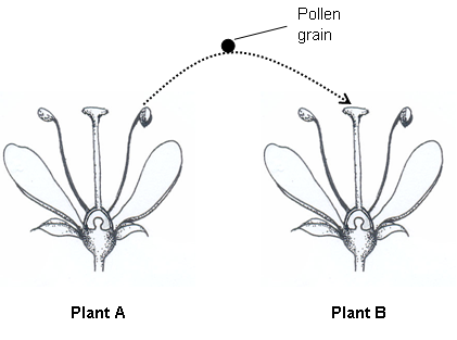 pollination and b stamen c Pollination is the transfer of  the flower of the early purple orchid has only one stamen whose anthers are large and contain a  a b c d e f g h i j k l m n o p.