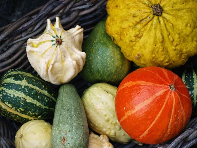 Forskellige græskar giver farve og fasthed til efterårets have