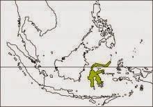 Sulawesi ground dove Gallicolumba tristigmata