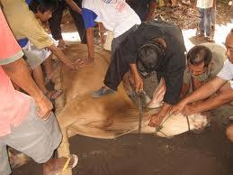 """<a href=""""http://pandawalimamedan.blogspot.com/2012/10/penyembelihan-hewan-sesuai-islam-tidak.html"""" alt=""""Penyembeliahan Hewan Sesuai Syari'at Islam""""/></a>"""