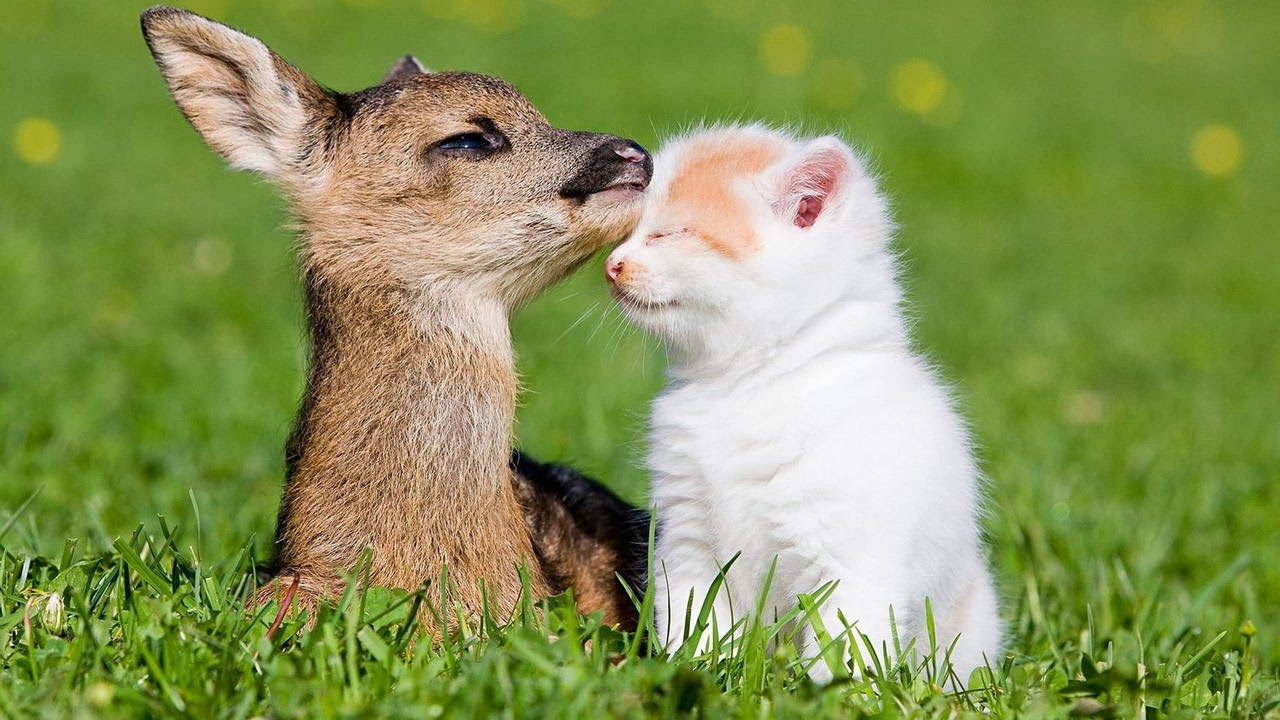 Funny animals of the week - 7 March 2014 (40 pics), baby deer and kitten friend