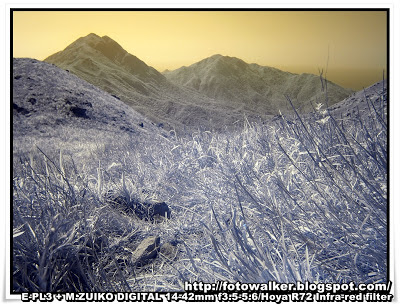紅外線攝影(Infrared Photograph)@大東山