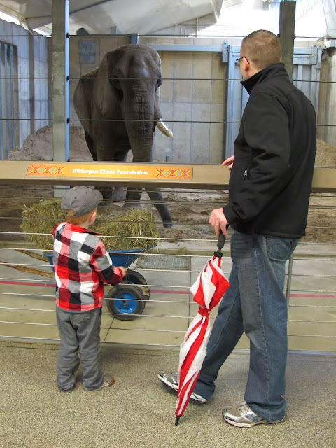 Seeing an Elephant with Porter & Daddy
