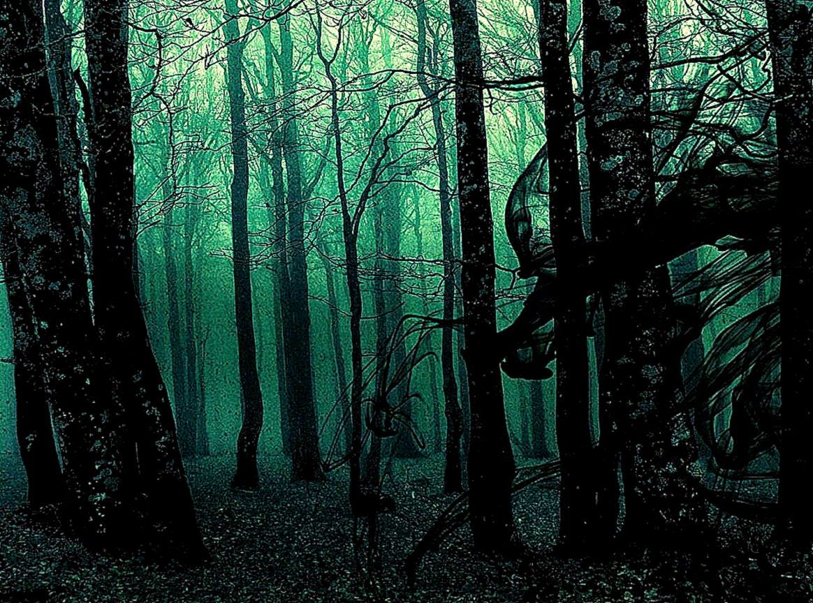 black forest wallpaper cool hd wallpapers