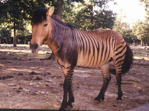 21 Hybrid Animals Pictures
