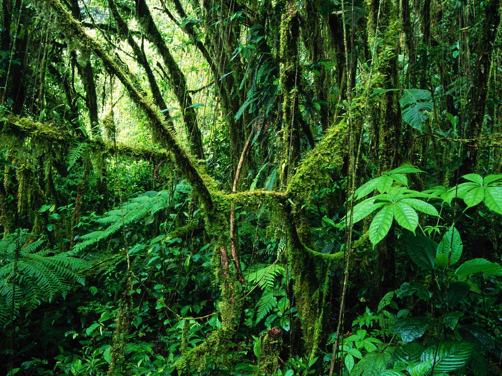 Cloud forest the planet earth beauty of the blue planet - Plante jungle ...