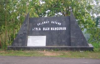kebun buah mangunan2