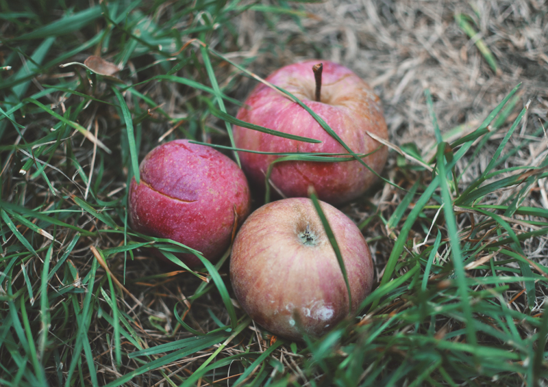 The Flying Clubhouse: First Day of Autumn | Red Delicious