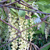 Bunga Orkid Ni Unik..