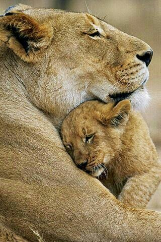 Momma and her baby