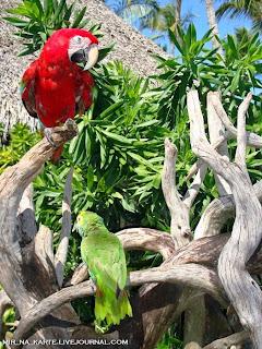 Republik Dominican Resort :- 46foTo